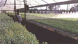 Our Nursery operation